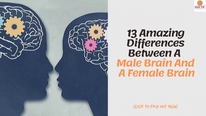 13 Amazing Differences Between A Male Brain And A Female Brain