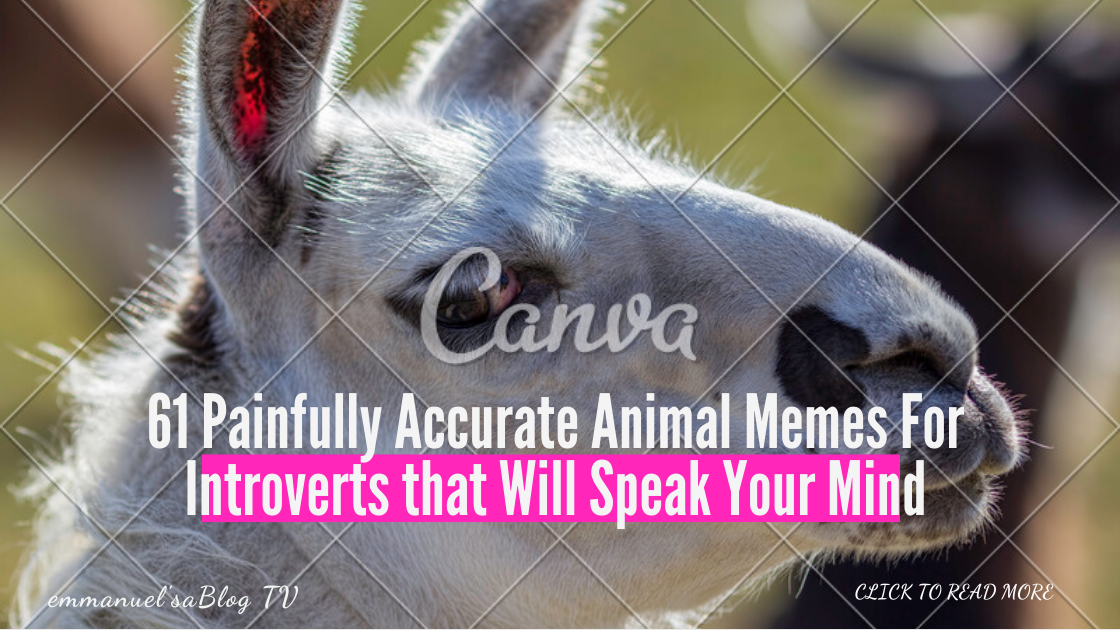 61 Painfully Accurate Animal Memes For Introverts that Will Speak Your Mind